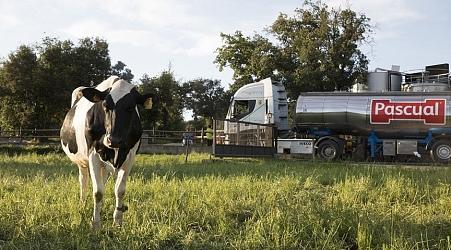 ¿La mejor leche? La de las »vacas felices«